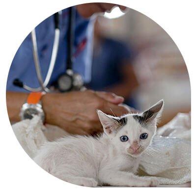 service imagerie Leonis clinique vétérinaire - consultation médicale