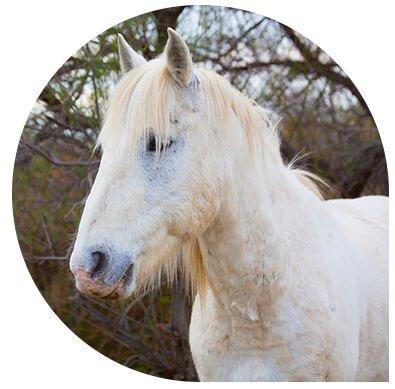 service vétérinaire cheval leonis - Consultation médicale