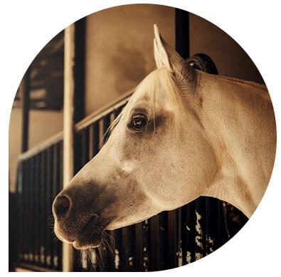 service vétérinaire cheval - Leonis - Consultation médicale