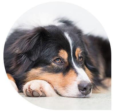 service vétérinaire chien - clinique Leonis - Consultation médicale