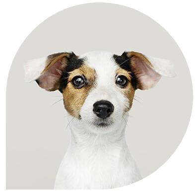 service veterinaire chien Leonis - Consultation médicale