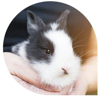 service imagerie pour Nac nouveaux animaux de compagnie Clinique vétérinaire Leonis
