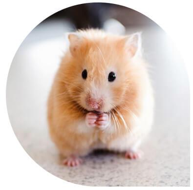 consultation pour Nac nouveaux animaux de compagnie Clinique vétérinaire Leonis
