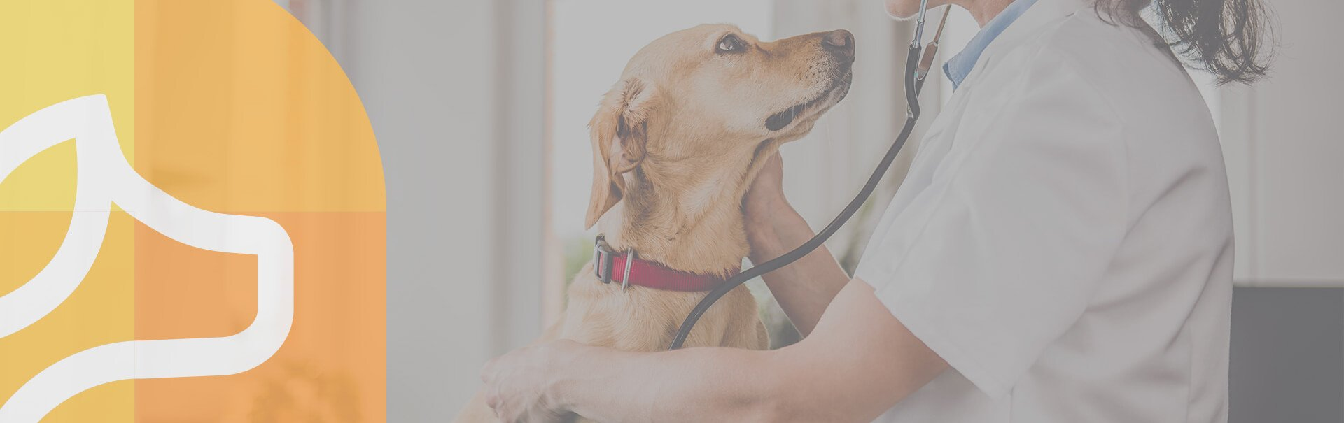 Vétérinaire chien - Clinique Léonis - Consultation médicale