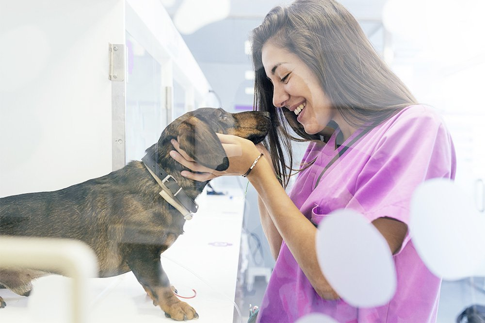Clinique vétérinaire Leonis - nac - chien - chat - chevaux soins