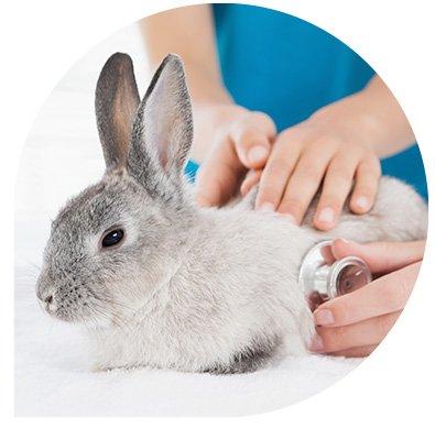 Vétérinaire pour nouveaux animaux de compagnie - service de consultation radiologie chirurgie léonis