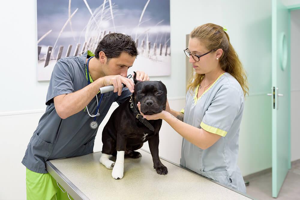 Clinique vétérinaire pour chien- Léonis