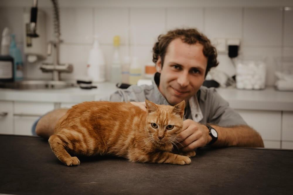 Clinique Léonis domaine d'intervention chat