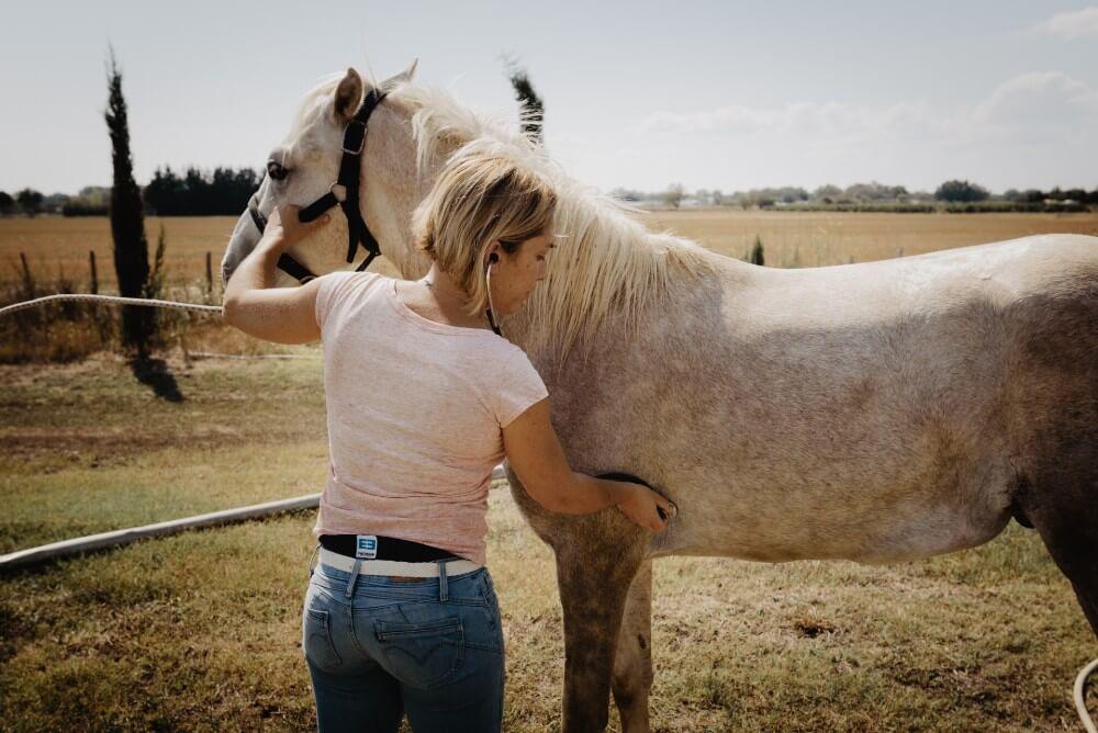 Clinique Léonis domaine d'intervention cheval